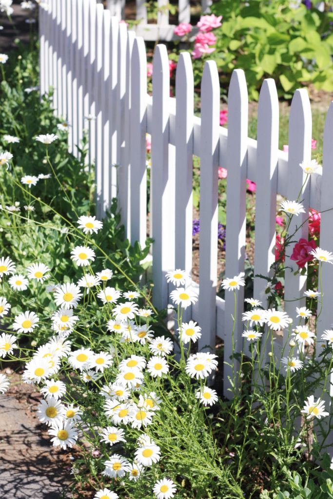 Martha's Vineyard garden