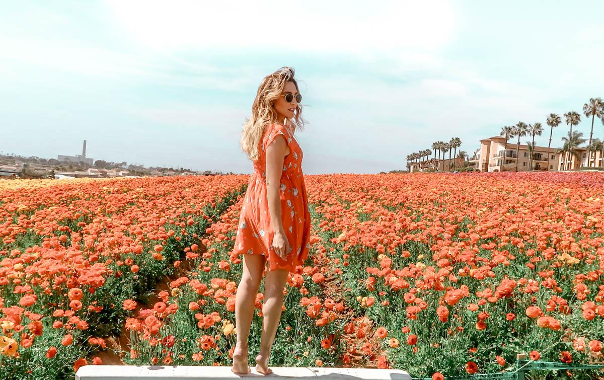 The Flower Fields, San Diego, CA