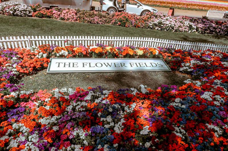The Flower Fields, Carlsbad San Diego, CA