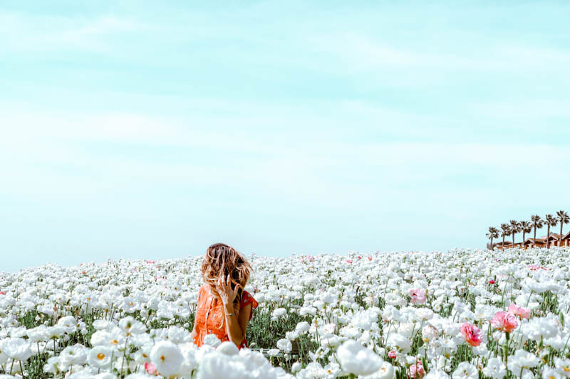 The Flower Fields, Carlsbad San Diego, CA