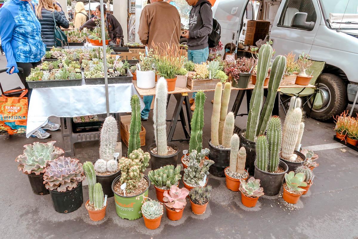 Cactus at the Rose Bowl Flea Market